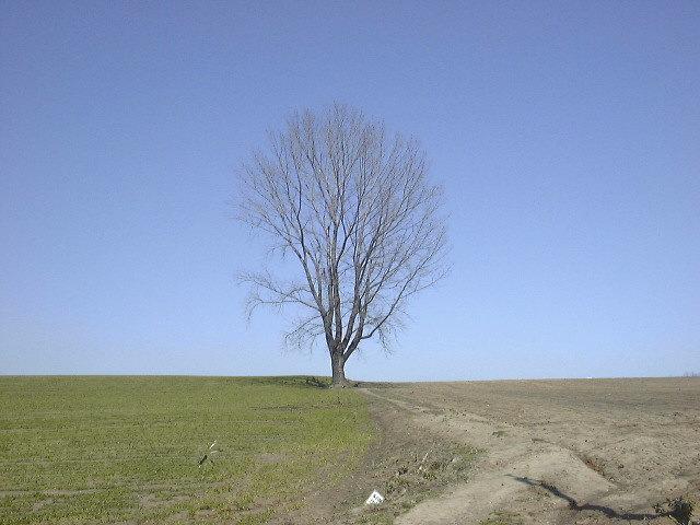 哲学の木(1)