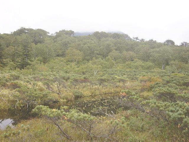神仙沼・沼付近の湿原(1)