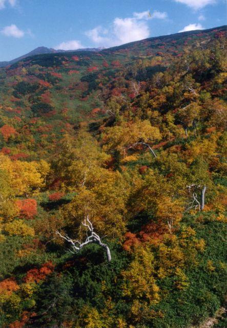 旭岳ロープウェイからの風景(2)
